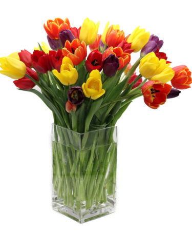 Luxury Rainbow Tulip Bouquet-Flower-Arangement-Delivery-Las-Vegas-Henderson-NV