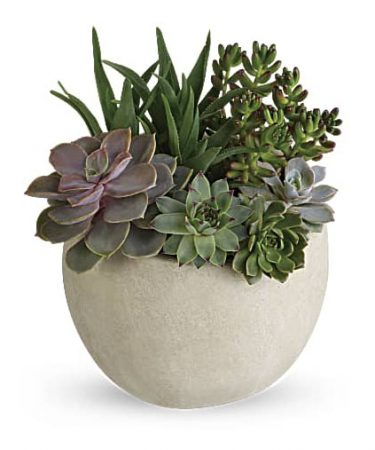 Desert Beauty Succulent Garden-Same-Day-Flower-Delivery-Las Vegas-Henderson-NV