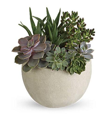 Desert Beauty Succulent Garden-Same-Day-Flower-Delivery-Las Vegas-Henderson-NV